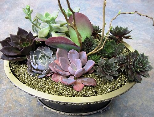 Succulent Dish Garden Ideas use unique upcycled containers to create your own succulent dish garden these tin Succulents Diy Succulent Dish Garden 2