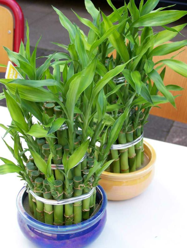 19 best houseplants