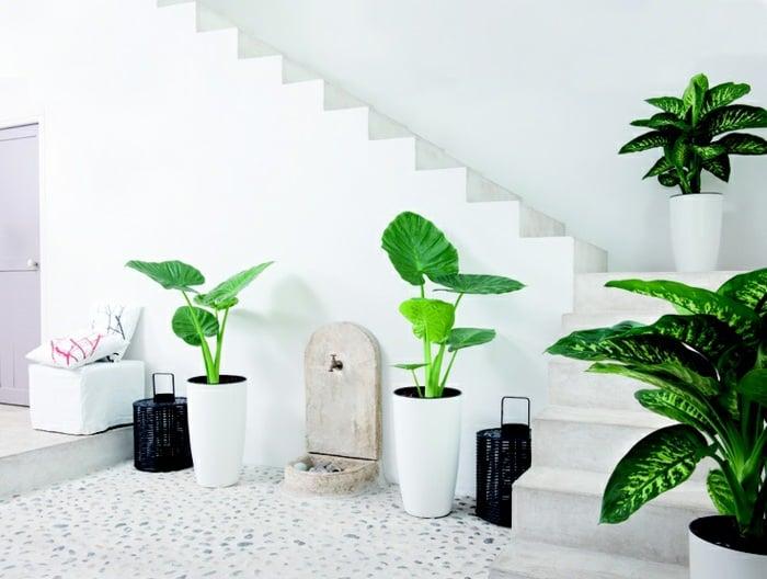 99 great ideas to display houseplants indoor plants for Indoor green plants images