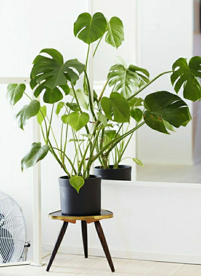 House Plants Decoration Ideas 99 great ideas to display houseplants | indoor plants decoration