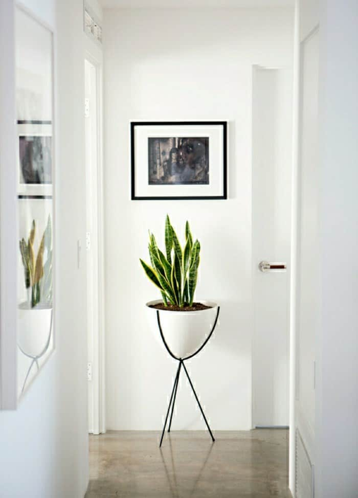 houseplant display ideas more 9