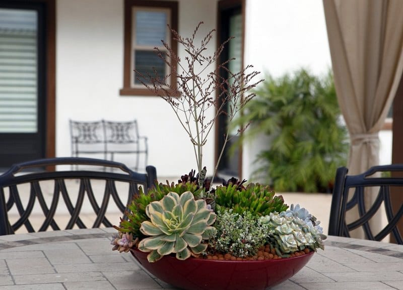 learn how to make a succulent dish garden in this step by step tutorial this succulent dish garden will adorn your room and fill it with desert warmth