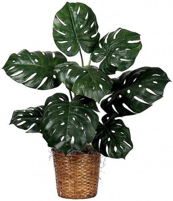 Tropical house plants images