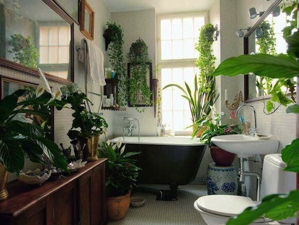 You Can Also Grow Houseplants In Your Bathroom Consider This Garden