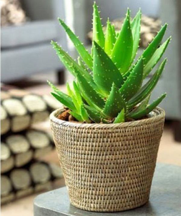 19 best house plants