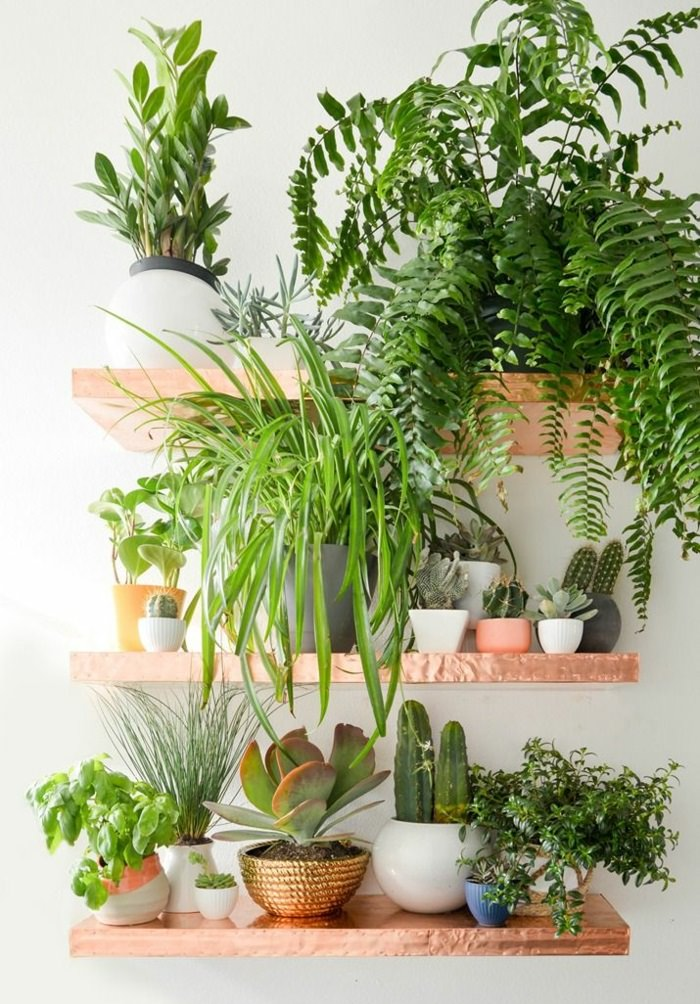 use shelves in your home to keep the plants on it there you can do a small indoor garden like set up - House Plants Decoration Ideas