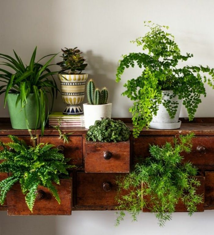 Indoor Apartment Plants: 99 Great Ideas To Display Houseplants