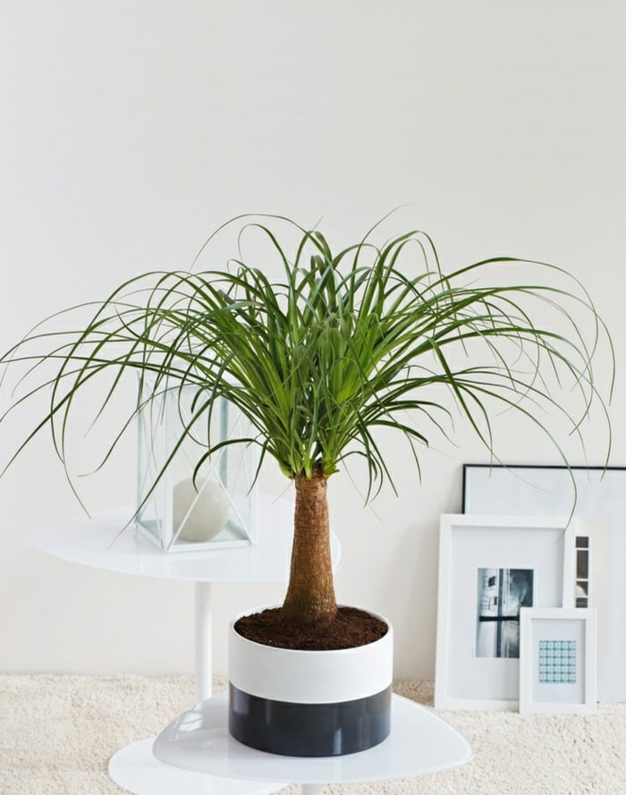 In house plants decoration ideas