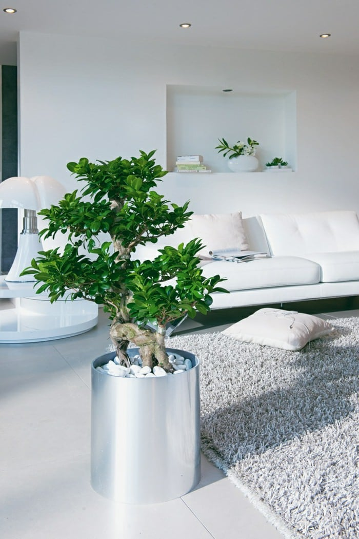 houseplant display (2) & 99 Great Ideas to display Houseplants | Indoor Plants Decoration ...