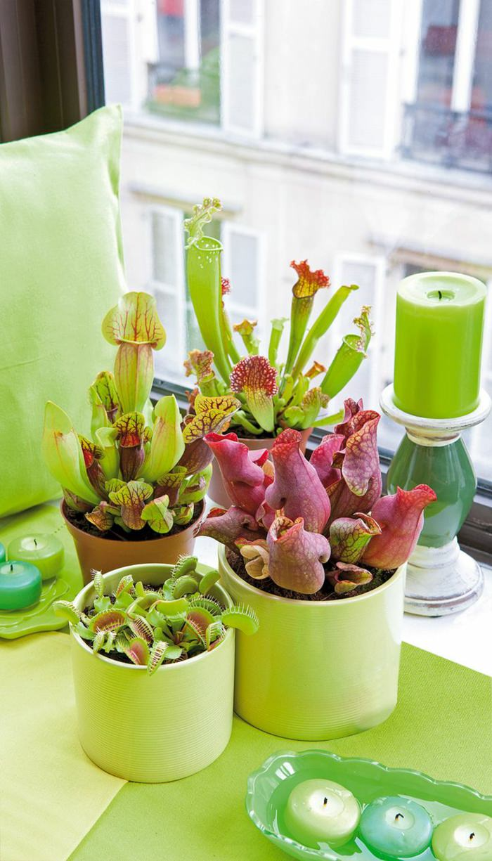 flowers houseplants, ornamental bamboo houseplants, palm houseplants, indoor houseplants, on best feng shui houseplants