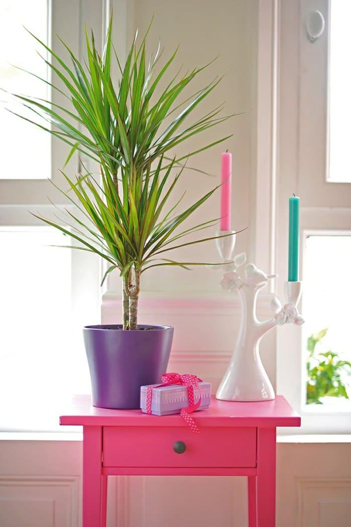 99 great ideas to display houseplants indoor plants decoration balcony garden web - Great indoor houseplants ...