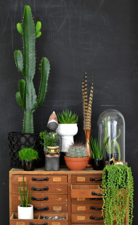 houseplants display ideas 3