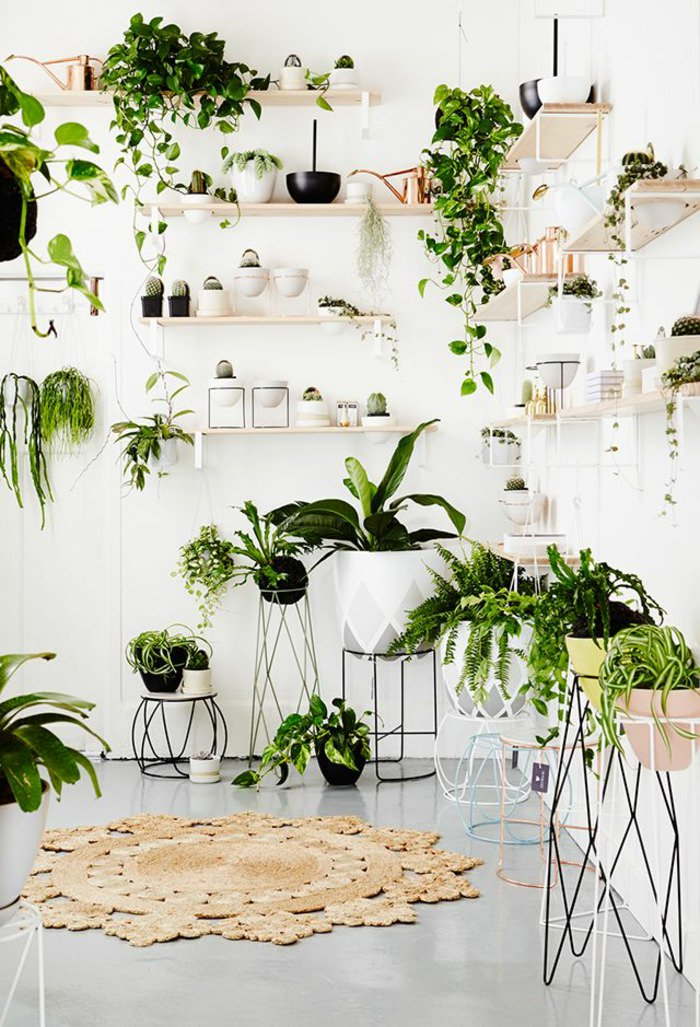 11 houseplants display ideas 5 - House Plants