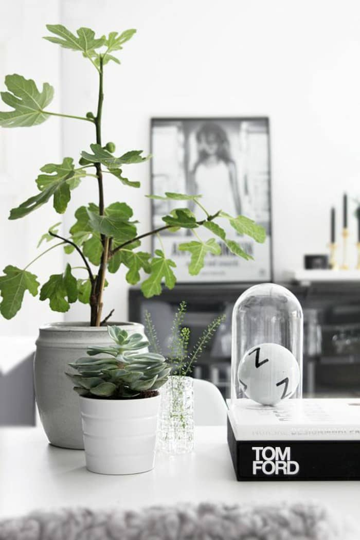 81 houseplants ideas - House Plants Decoration Ideas