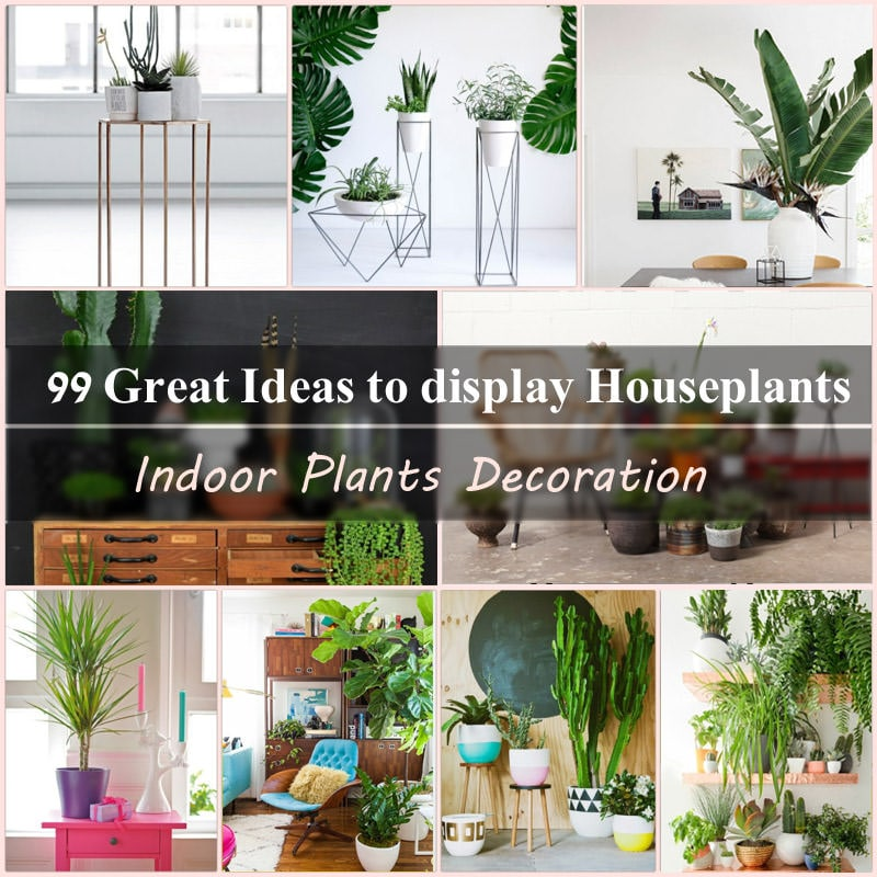 indoor plants decoration makes your living space more comfortable breathable and luxurious see these 99 ideas on how to display houseplants for - House Plants Decoration Ideas