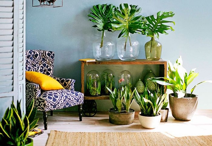 99. indoor plants display ideas