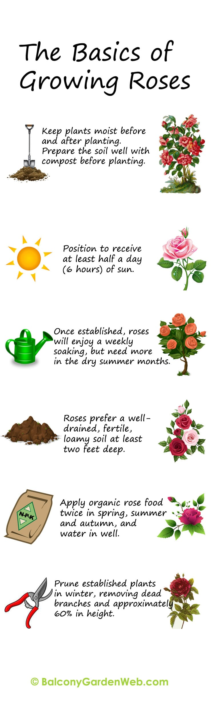 30 diagrams to make you master in growing roses balcony garden web the basics of growing and planting roses more amazing info in this post ccuart Images