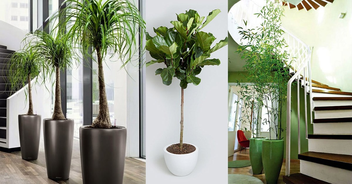 18 best large indoor plants tall houseplants for home Interior design plants inside house