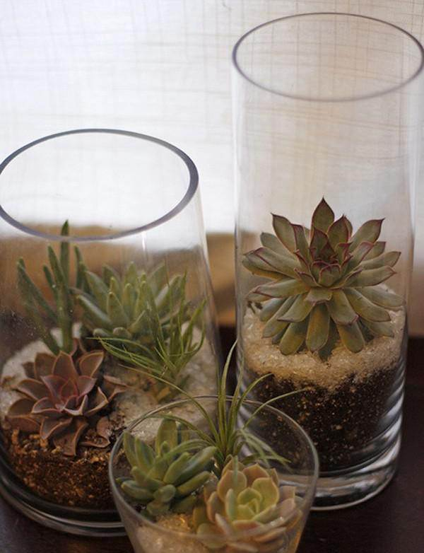 DIY Succulent Glass Planter