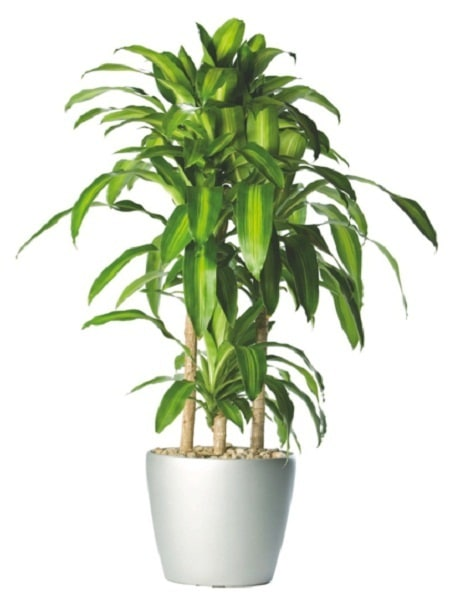 18 best large indoor plants tall houseplants for home - Plantas artificiales decorativas ...