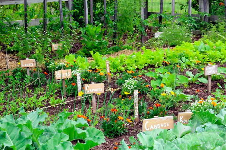 5 secrets of a high yield gardening vegetable gardening for Flowers and gardens pictures