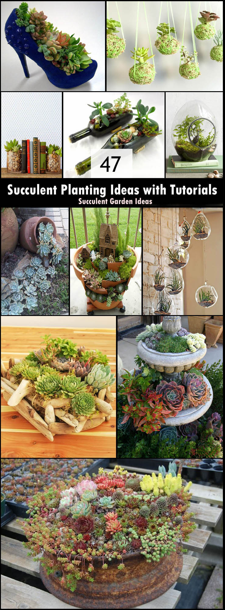Succulents Garden Ideas 26 best succulent garden ideas around the world Pin It Succulent Planting Ideas With Tutorials
