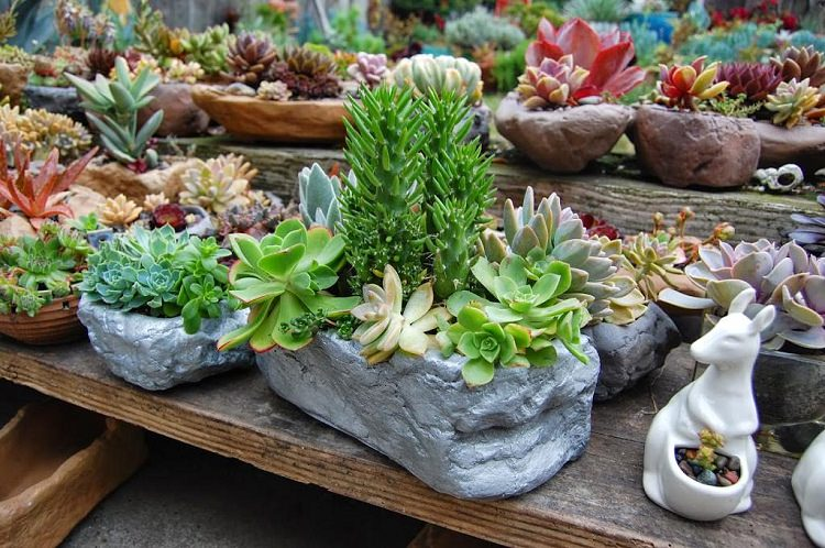 Succulent Garden Ideas find this pin and more on garden ideas projects 26 Amazing Succulent Planting Ideas 3