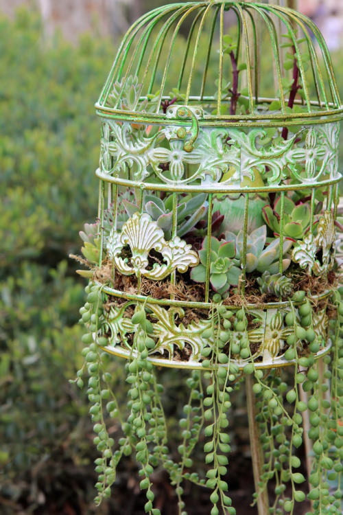this is one of the coolest succulent planting ideas in our list succulents are the easiest plants to grow and even a beginner can grow them successfully