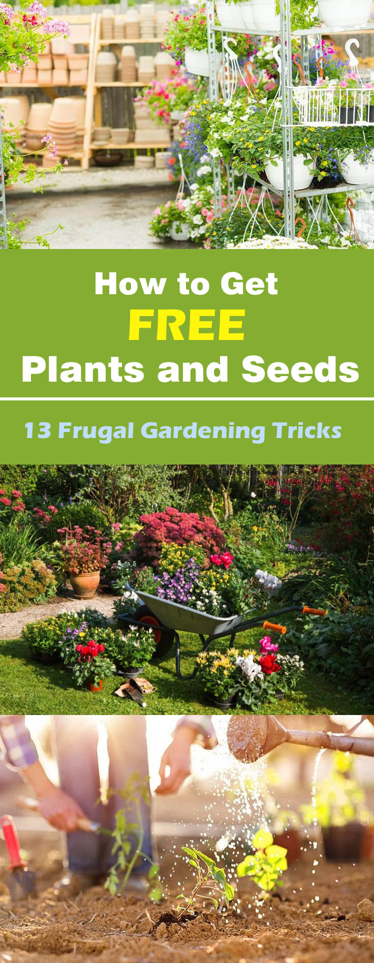 How to Get Free Plants and Seeds 13 Frugal Gardening Tricks. Frugal Landscaping Ideas Forum   SNSM155 com