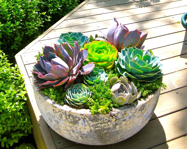 You Can Make Interesting Compositions With Succulents Cover The Entire Surface Of Soil Their Dense Foliage Succulent Leaves Vary In