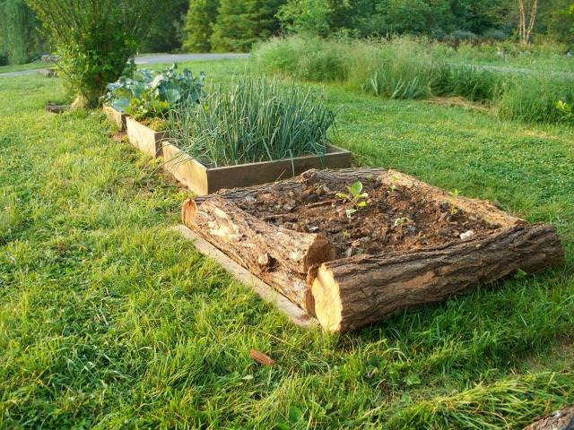 Garden Bed Ideas here is a series of smaller raised garden beds over a large area there is Stumps About 30 Cm Thick In Diameter Are Perfect As Walls For Raised Bed Irregular Stumps And Logs Can Also Be Used If You Want To Give Your Garden A