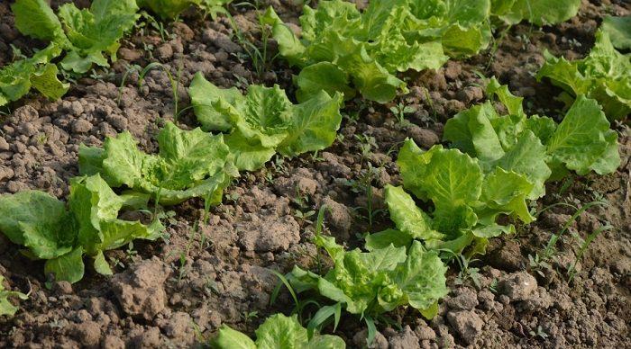 5 secrets of a high yield gardening vegetable gardening for Vegetable garden soil