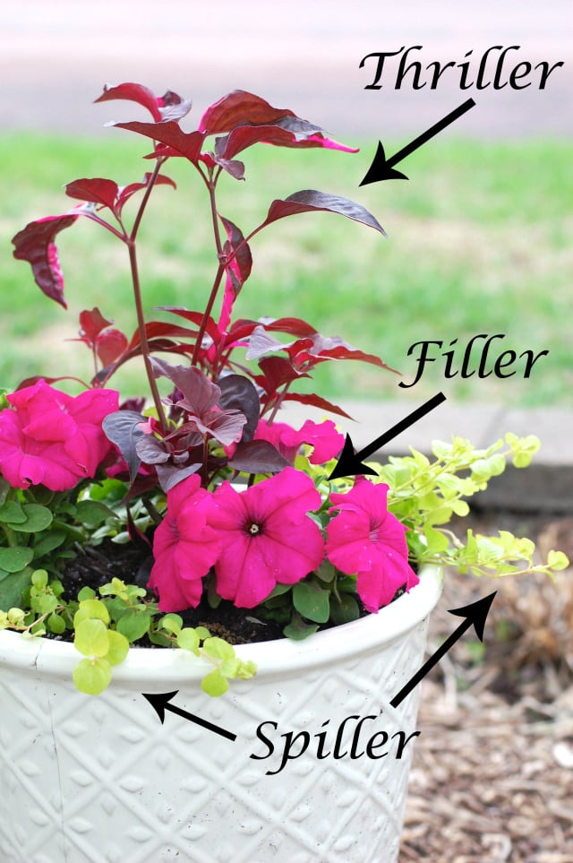 Planting flower pots thriller spiller filler container gardening image credit space gardening workwithnaturefo