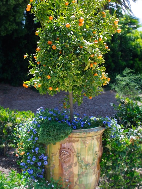 Planting Flower Pots Thriller Spiller Filler Container