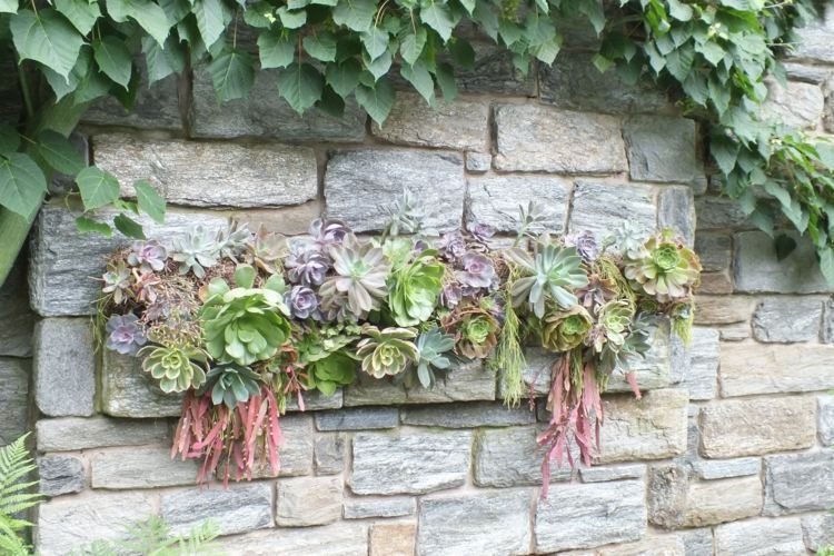 see in the picture above succulents planted in a stone wall take inspiration from this idea and think more creative succulent planting ideas