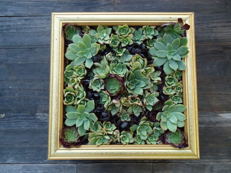 Succulent Green Wall With An Old Frame. Succulent Planting Ideas ...