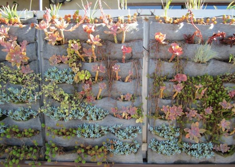 31. Succulent Planting Ideas ...