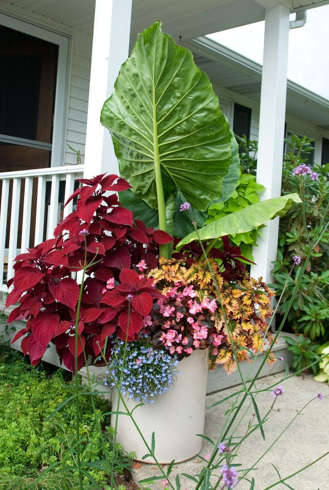 Planting flower pots thriller spiller filler container gardening ideas balcony garden web - Flowers for container gardening ...