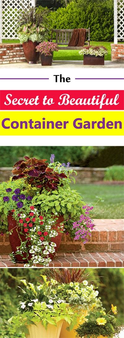 The Secret To Beautiful Container Gardens