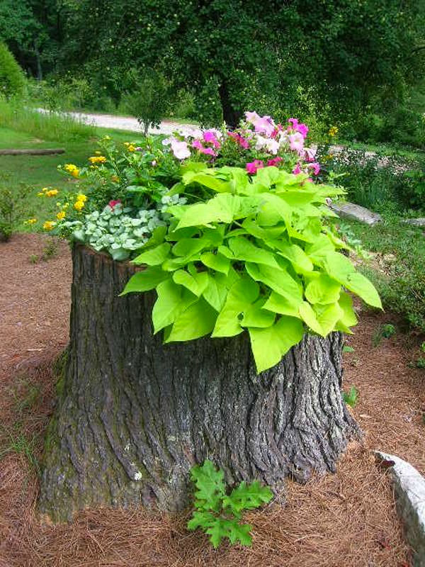 Tree Stump Planter Ideas 18