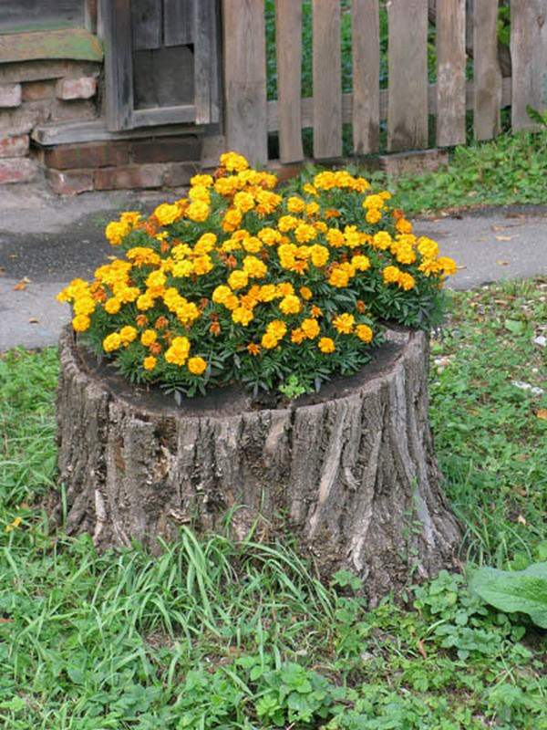 19 blazing tree stump planter ideas that 39 ll impress you for Jardines con troncos