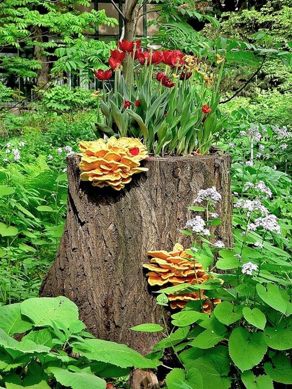 19 blazing tree stump planter ideas that 39 ll impress you for Tree trunk slice ideas