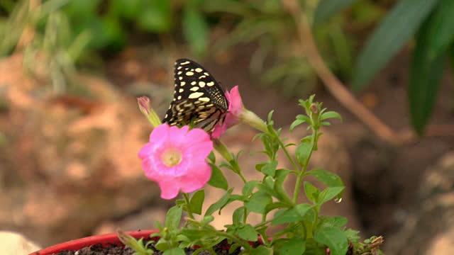Plan del jardín de la mariposa
