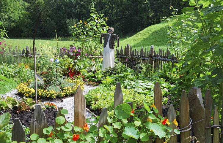 These 7 Vegetable Gardening Tips On Companion Planting, Intercropping And  Crop Rotation Will Improve The Productivity Of Your Garden.