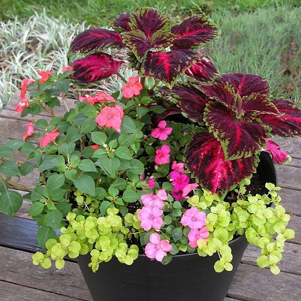 Donu0027t Grow Flowering Plants Alone, Especially Annuals. Create Beautiful  Combinations.