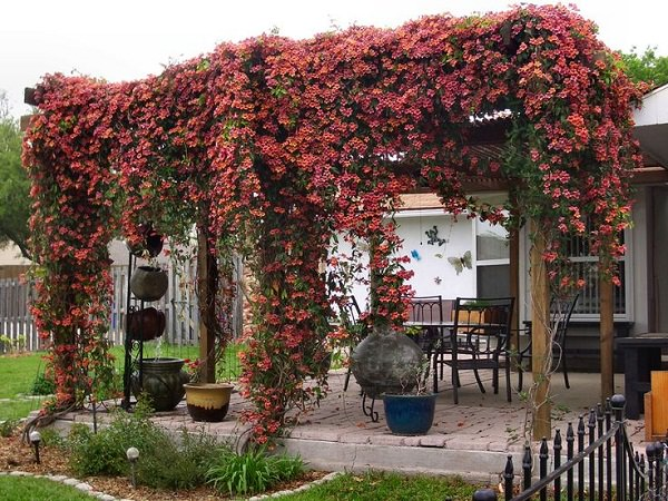 19 Best Pergola Plants | Climbing Plants for Pergolas and Arbors ...