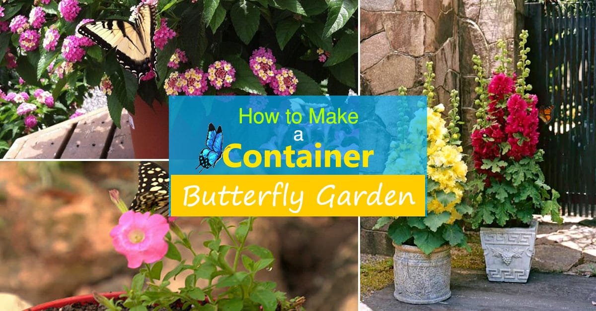 How To Make A Butterfly Container Garden | Making A Butterfly Garden |  Balcony Garden Web