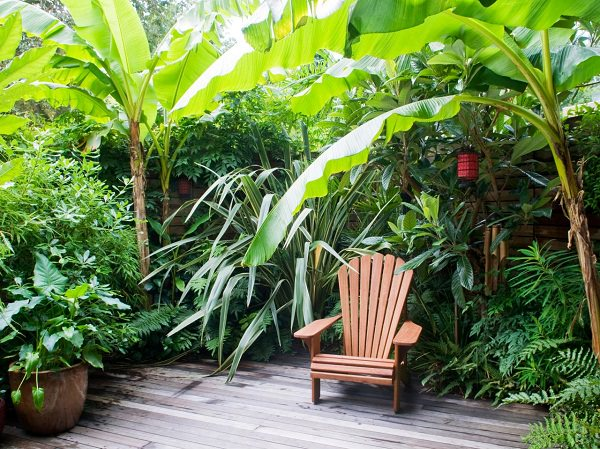 14 cold hardy tropical plants to create a tropical garden for Tropical landscape
