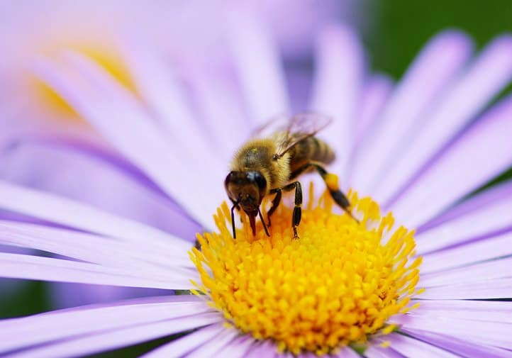 10 Most Beneficial Garden Insects You Should Avoid Killing