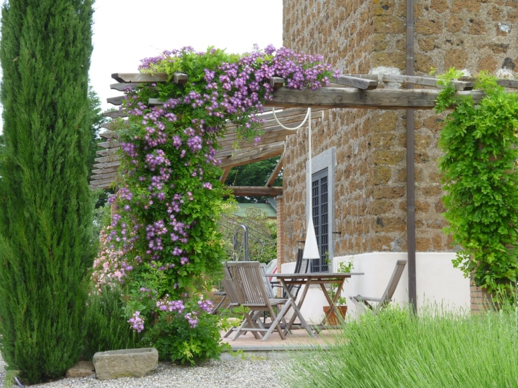19 best pergola plants climbing plants for pergolas and arbors balcony garden web. Black Bedroom Furniture Sets. Home Design Ideas